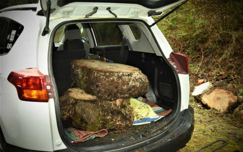 sourcing wood - two slabs in a trunk